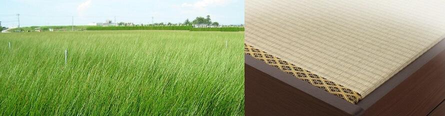 い草・畳の写真