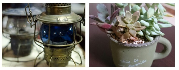 ランタンと観葉植物