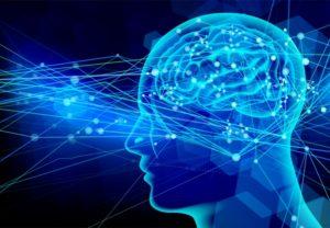 脳の仕組みイラスト
