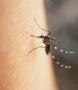 肌を刺す蚊の写真