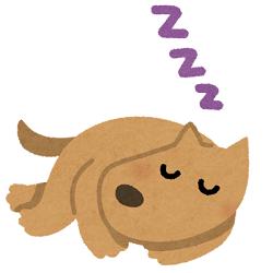よく寝る犬